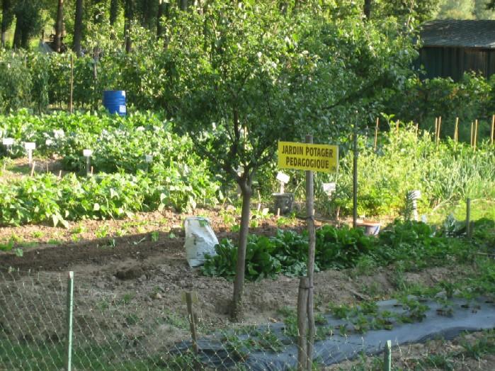 met daarachter de pedagogische groente tuin