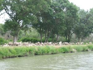 en soms ook schapen