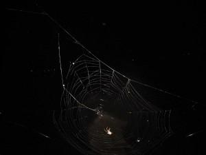 Sanne kan haar hart weer ophalen: spinnen genoeg