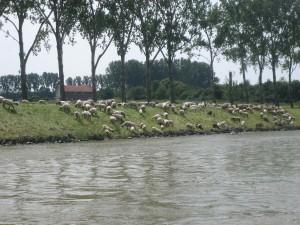 dit zijn nu schaapjes op het droge