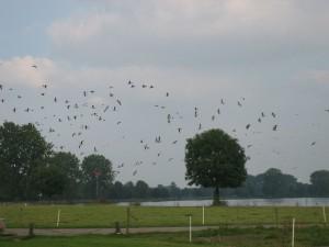 behalve snateren vliegen ze ook bij voorkeur boven net gepoetste dekken