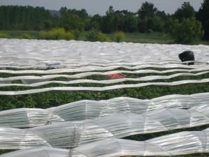 aardbeien plukkers op het veld naast de aanlegplaats